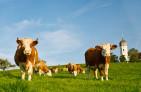 農業生産者のホームページ制作について