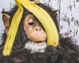 猿でもできるホームページコンツンツの作り方